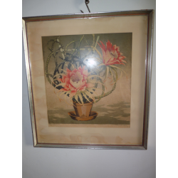 Wilhelm Pirkhoff(Prikryl): Rozkvitnutý kaktus